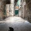 クロアチア旅行(13)歴史建築で生きる猫たち@スプリット