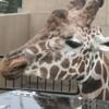 旭山動物園訪問