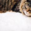 かわいく撮れる猫写真の撮り方のコツ