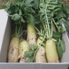 野菜高騰の場合は、疑似家庭菜園でしのげます