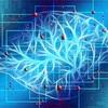 「脳」と「会社」の類似点