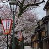 金沢の桜は満開「主計町」