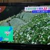 テレビ大阪「ニュースリアル」にて、茶畑ハイキング&茶摘み体験を取材頂きました!【d:matchaのこと】