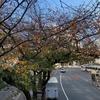 桜の木の四季折々