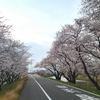 2021-03-27 清須あまで桜を見る③[完]