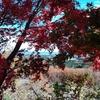 福島県新地町 秋の鹿狼温泉(かろうおんせん)は紅葉越しに見る海の青がきれいでした。