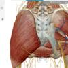 星ヶ丘病院での体表解剖