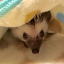 Winnie-the-Hedgehog