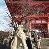 清水寺の梅2020、開花状況は見頃まであと少し。
