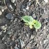 Refarmで新芽がでた!