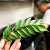 寄稿:カレーリーフはカレー以外に使え! 日本の「南インド料理の開拓者」から意外な使い方を習ってきた