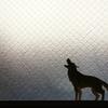 【スマブラ人狼】分析3:実際に考察しながら視聴する/ピカチュウ…黒打ち…狩人CO…うっ頭が…(∩´∀`)∩<林さーん!