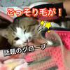 Ayatoが話題の猫グッズをご紹介★ブログ先行動画付き☆