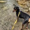 まめ吉、大芦川で川遊び【愛犬と川遊び。今年は西大芦フォレストビレッジへ。駐車場やトイレ、更衣室もあるよ。】
