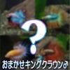 (熱帯魚)色おまかせ キングクラウン ベタ ♂<1匹>【水槽/熱帯魚/観賞魚/飼育】【生体】【通販/販売】【アクアリウム】