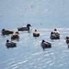 神功池の冬の鳥