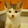 子猫ーズの写真撮影