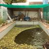 養殖プールにネットを張って直射日光対策