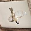 🐤スズメの巣を発見!親鳥を狙います📷