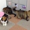 第2回猫カフェ・GSRDオフ会 〜貸切で猫と遊ぼう〜