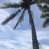 常夏の1日目は休み。さっそくナンディのビーチへ!