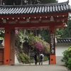 京都 三室戸寺 ツツジ