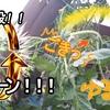 【日々のこと】【ゆる菜園】必殺!?Uターン誘引ッ!!!~結実と問題発生?~