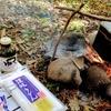 『キャンプ飯を食おう!』キャンツー、ソロキャン、やってみましょーよ(*'▽')。ってお話⑥