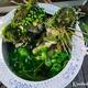 【メダカビオトープ】睡蓮鉢でお庭に自然的蚊除け対策!