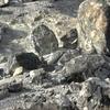 北海道一周その後2016/10/18インチキズーム観光那須高原パワースポット殺生石をみた
