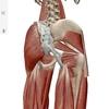 解剖学のアプリ