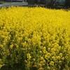 春の花とツバキ