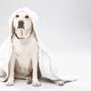ネクスガード(中型犬用10〜25kgノミマダニ対策)が良いらしいので通販最安値価格を調べた