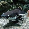 【さいたま水族館】水族館紹介!第4弾!マニアックな淡水魚中心の水族館!