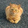 外猫問題について考えてみる ~家猫? 外猫? それはリスクと一緒に考えよう~