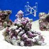 (海水魚)Sグレード形状お任せライブロック Sサイズ(1個) + スタンドNo.3 セット 本州・四国限定