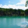 美瑛の「青い池」は池じゃなくて、水たまり?
