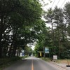 北軽の緑も濃くなりました。本日、北軽井沢マラソン、30回大会です。