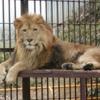 岡山県在住のみんなー! 存続危機の池田動物園にいるフレンズを紹介するよ! #けものフレンズ