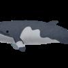 【ブラジル人の反応】日本の31年ぶりの商業捕鯨再開について【日本袋叩き】