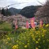 この桜のように清く正しく美しく生きていこうと思いました