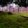 京都・鳥羽 - 城南宮の春の賑わい
