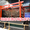 羽田空港観察記 ~Mar. 2019 (Cherry Blossoms)~