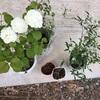 植栽選びのコツ