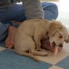 犬混合ワクチン接種後の朝