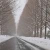 今年も大雪のバンビー4…マキノ高原