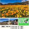 23日(土)から西伊豆の松崎で田んぼをつかった花畑 種まきイベント開催予定