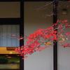 日本家屋の紅葉