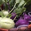 farm andante 美味しい野菜とふれあい菜園