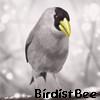 第2弾画像で名前がわかる!鳥の名前辞典イで始まる鳥6選【保存版】